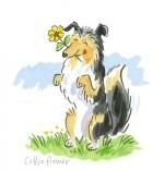 Collie Flower