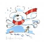 Bichon freeze